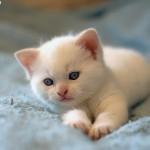 white_kitten-8369