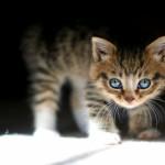 cute_kitty-1245