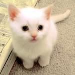 Kitty-kitties-9109284-500-460